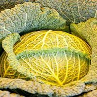 How many carbs are there in cabbage?
