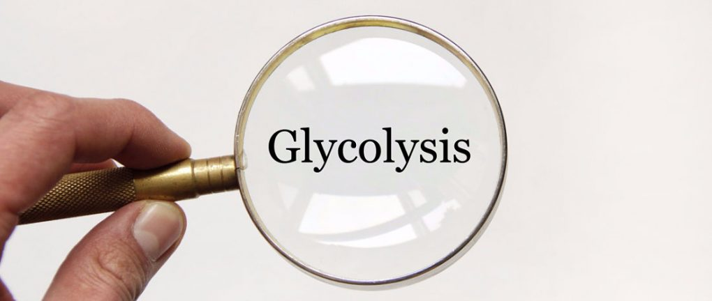 Answering the question: where does glycolysis take place?