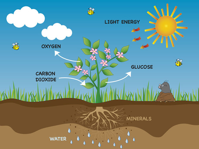 Why Is Photosynthesis Important And What Happens