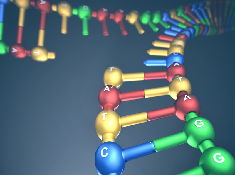 Answering the question, Why is DNA replication important?
