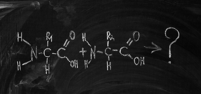 Answering the question, how many amino acids are there?