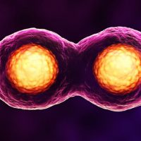 What is mitosis?