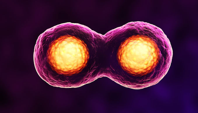 What is mitosis? A look at the definition and stages of mitosis.